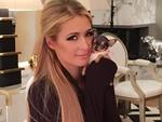 Paris Hilton encanta seguidores ao mostrar nova mascote - Cartão ...